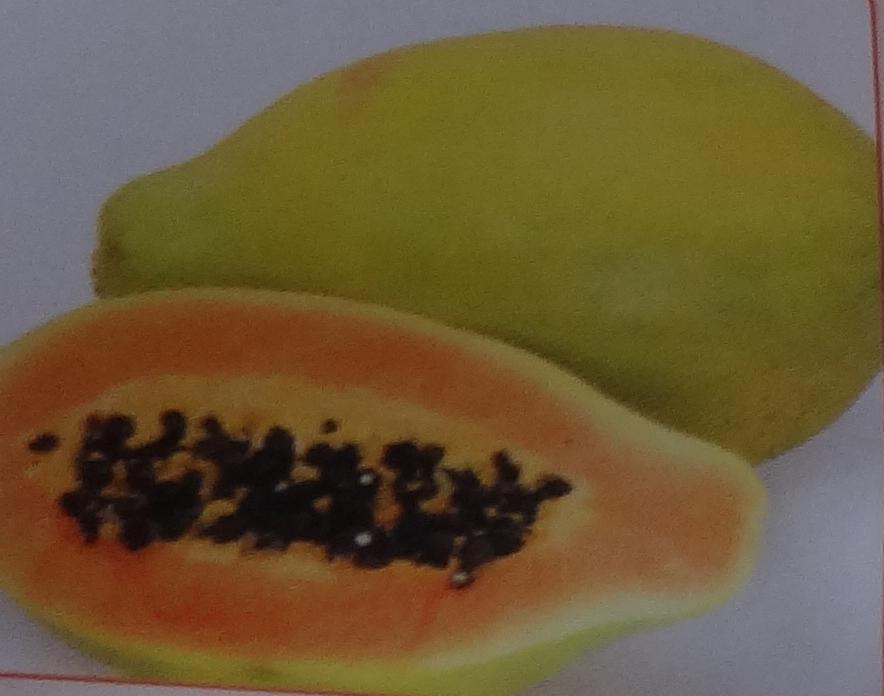 экзотические фрукты название и фото